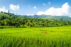 Forrest на Mae Wong, Таиланде Стоковое фото RF