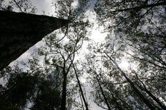 forrest тропическое Стоковая Фотография