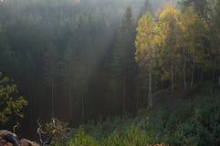 Forrest Stockbilder