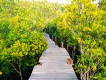 有木桥的走道通过forrest的美洲红树 库存照片