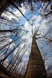 Forrest. Against a sky with fish eye lens shot. Focus on the trunk. High DOF stock photos