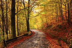 Forrest alley of leafage Royalty Free Stock Photography