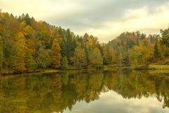 Forrest in autunno Immagini Stock