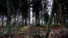 Forrest in autunno, cielo soleggiato blu, Veluwe i Paesi Bassi fotografia stock libera da diritti