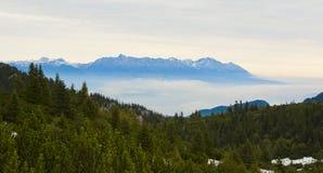 Forrest avec la montagne Images libres de droits