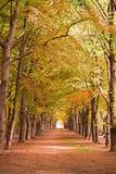 Forrest-Bäume im Wald im Herbstfall Stockfotos