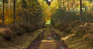 Forrest Bahn des Moray Stockbilder