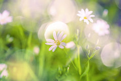 Forrest blossoms Royalty Free Stock Photography