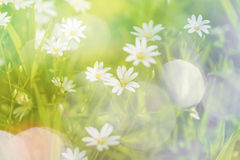 Forrest blossoms Royalty Free Stock Photos