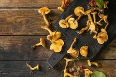 Forrest chanterelle mushrooms Stock Photos