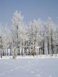 forrest congelé Photographie stock