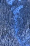 forrest couvert de neige sur une pente raide Photo libre de droits