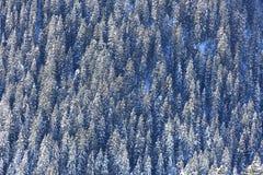 forrest couvert de neige sur une pente raide Photos libres de droits