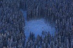 forrest couvert de neige sur une pente raide Images libres de droits