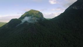 Forrest Covered Mountain stock footage