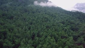 Forrest Covered Mountain stock video