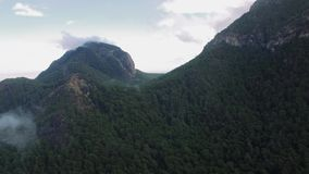 Forrest Covered Mountain stock video footage