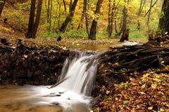 forrest creek obrazy stock