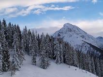 Forrest dans les montagnes Photographie stock libre de droits