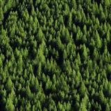 Forrest de árvores de pinho Foto de Stock