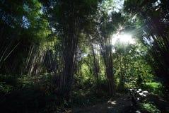 Forrest de bambú foto de archivo libre de regalías