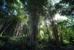 Forrest de bambú fotos de archivo libres de regalías