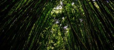 Forrest de bambú foto de archivo