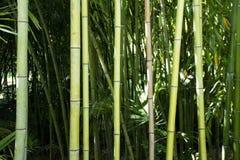 Forrest de bambu foto de stock