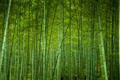 Forrest de bambu imagens de stock royalty free