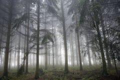 Forrest de niebla Fotos de archivo