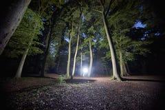 forrest in der Nacht mit gespenstischem Licht lizenzfreie stockfotos
