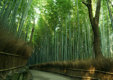 Forrest di bambù Fotografia Stock