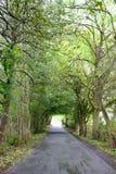 Forrest droga w Leeds, UK fotografia stock