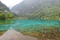 Forrest e lago in Jiuzhaigou fotografia stock libera da diritti