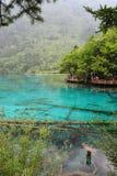 Forrest e lago in Jiuzhaigou fotografia stock