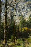 Forrest einzelne Bäume Autum in der Front lizenzfreie stockfotografie