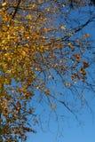 Forrest einzelne Bäume Autum in der Front Lizenzfreies Stockfoto