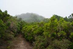 Forrest en Grecia Foto de archivo