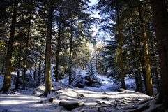 Forrest en la montaña en Bergen, Noruega Fotografía de archivo