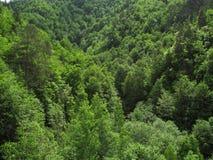 Forrest en las colinas Fotografía de archivo libre de regalías