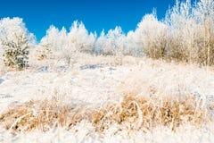 Forrest et herbe en hiver, tout le blanc image stock