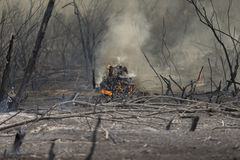 Forrest Fire- - Camarillo-Frühlinge 5-2-2013 Lizenzfreies Stockbild