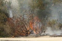 Forrest Fire- - Camarillo-Frühlinge 5-2-2013 Lizenzfreie Stockbilder