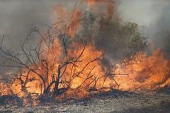 Forrest Fire- - Camarillo-Frühlinge 5-2-2013 Stockbilder