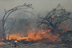 Forrest Fire- - Camarillo-Frühlinge 5-2-2013 Lizenzfreie Stockfotografie