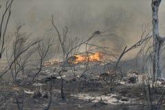 Forrest Fire- - Camarillo-Frühlinge 5-2-2013 Lizenzfreies Stockfoto