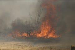 Forrest Fire- - Camarillo-Frühlinge 5-2-2013 Stockfoto