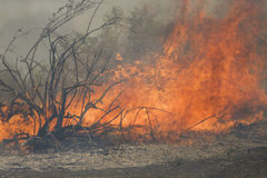 Free Forrest Fire - Camarillo Springs 5-2-2013 Stock Image - 30773391