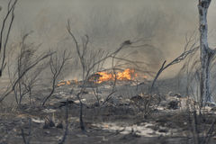 Forrest Fire - Camarillo Springs 5-2-2013 Royalty Free Stock Photo