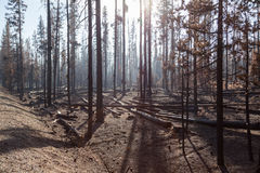 Forrest Fire Destruction Royalty Free Stock Photos